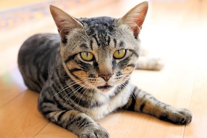 一眼レフカメラ、Canon EOS Kiss X9の画質と作例、大人猫