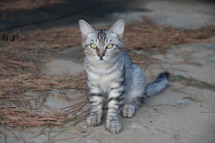 一眼レフカメラ、Canon EOS Kiss X9の画質と作例、子猫