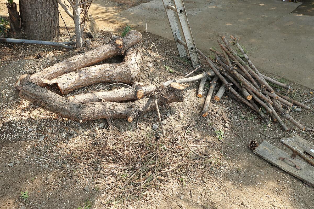 チェーンソーで切断された松の木の枝
