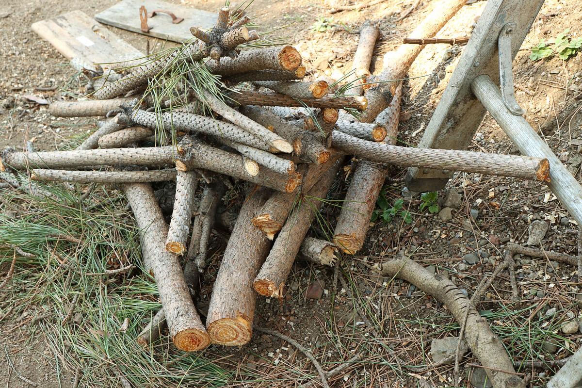 チェーンソーで切った松の細い枝