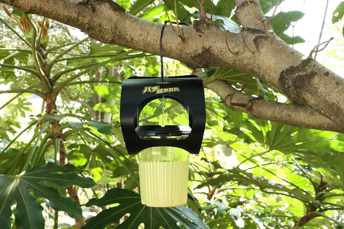 フマキラー 超ハチ激取れを木の枝に設置